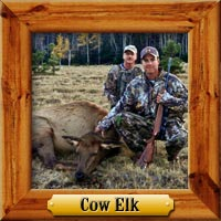 Cow Elk Hunting Photo Galleries