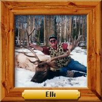 elk hunting photo galleries