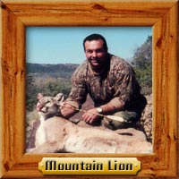 Mountain Lion hunting photo galleries
