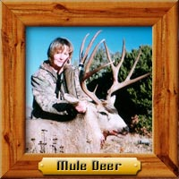 Mule Deer hunting photo galleries