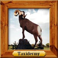 Taxidermy hunting photo galleries