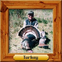 Turkey hunting photo galleries
