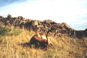 elk-archery012
