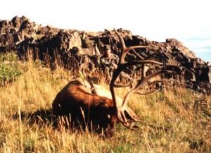 elk-archery040
