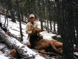 elk-cow008
