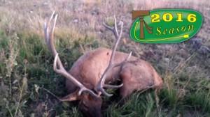 elk-rifle-190