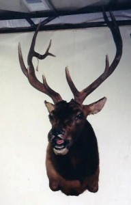 taxidermy023